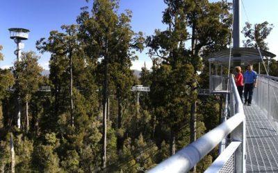 West Coast Treetop Walkway Tour