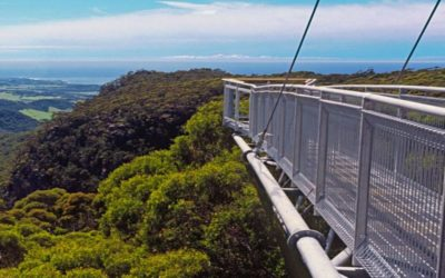 West Coast Treetop Walkway Tour